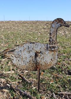 D50 North Carolina full size sheet iron silhouette Snow Goose decoy in old paint. 37� tall 28� wide